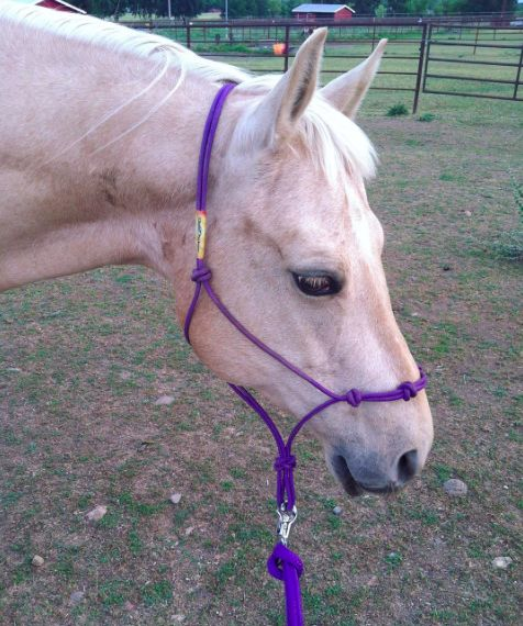 Sugar with Ruby's Clinton Anderson's training halter