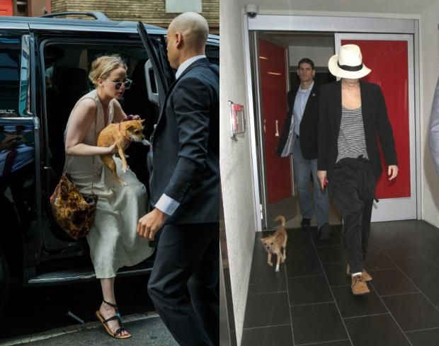 Дженнифер Лоуренс нагрубила журналистам из-за собаки https://joinfo.ua/showbiz/1208887_Dzhennifer-Lourens-nagrubila-zhurnalistam-iz-za.html