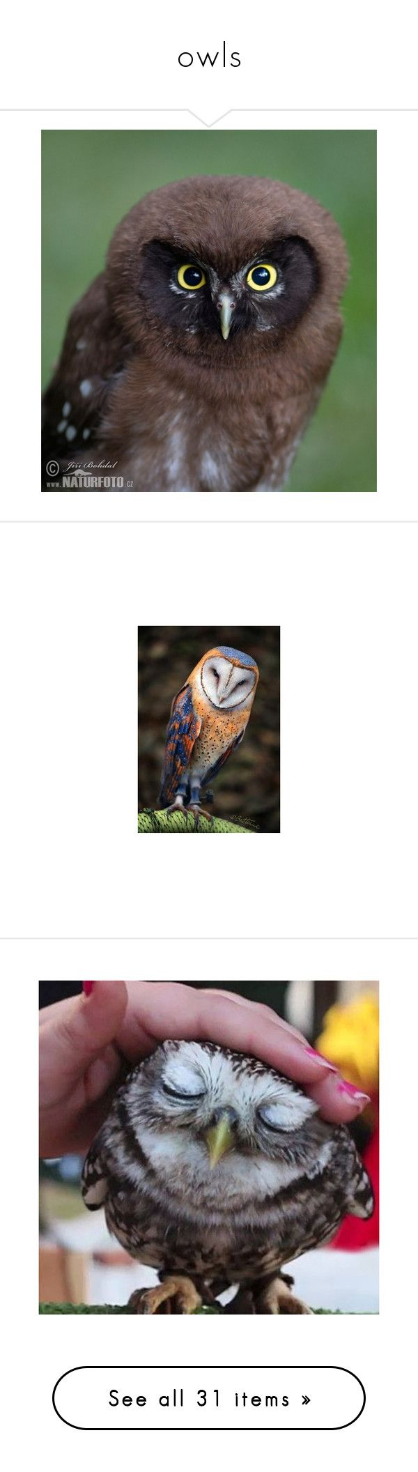 """""""owls"""" by valaquenta ❤ liked on Polyvore featuring animals, beauty products, home, home decor, owl home accessories, brinley co, owl home decor, wall art, zen home decor and owl wall art"""