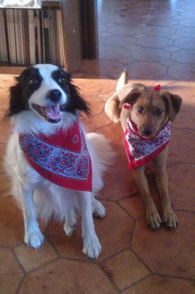 Rosso Vivo: cani e gatti puliti e profumati dentro e fuori casa con bicarbonato, aceto e tanto amore