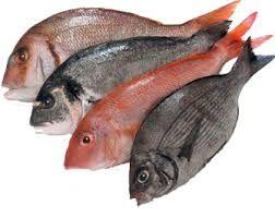 Resultado de imagen de pescado