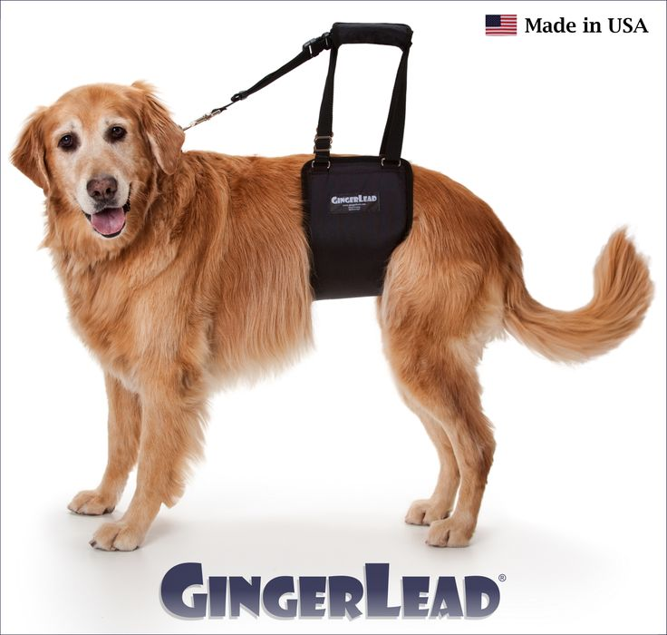 The GingerLead Dog Support & Rehabilitation Harness is a premium belly sling…