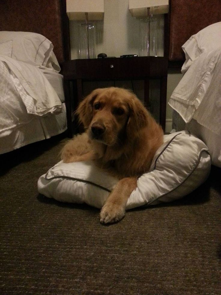 Our furry-friend, Beagh! Halifax pet-friendly accommodations.