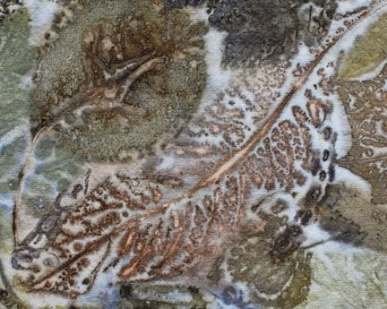 17 Best images about Botanical : direct print / imprint ...