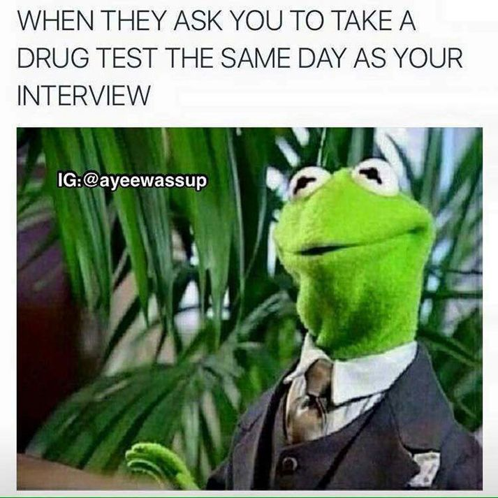 Pin On Kermit Funny Quotes