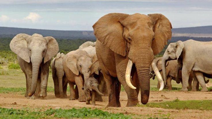 Addo Elephant National Park - #best National Parks In #southafrica  #addoelphantnationalpark #elephantnationalpark #elephant