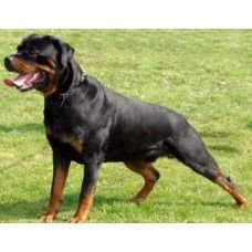 http://home4pet.com/Pet-Services/Pet-Trainers-Handlers/guarding-training-module-4-months