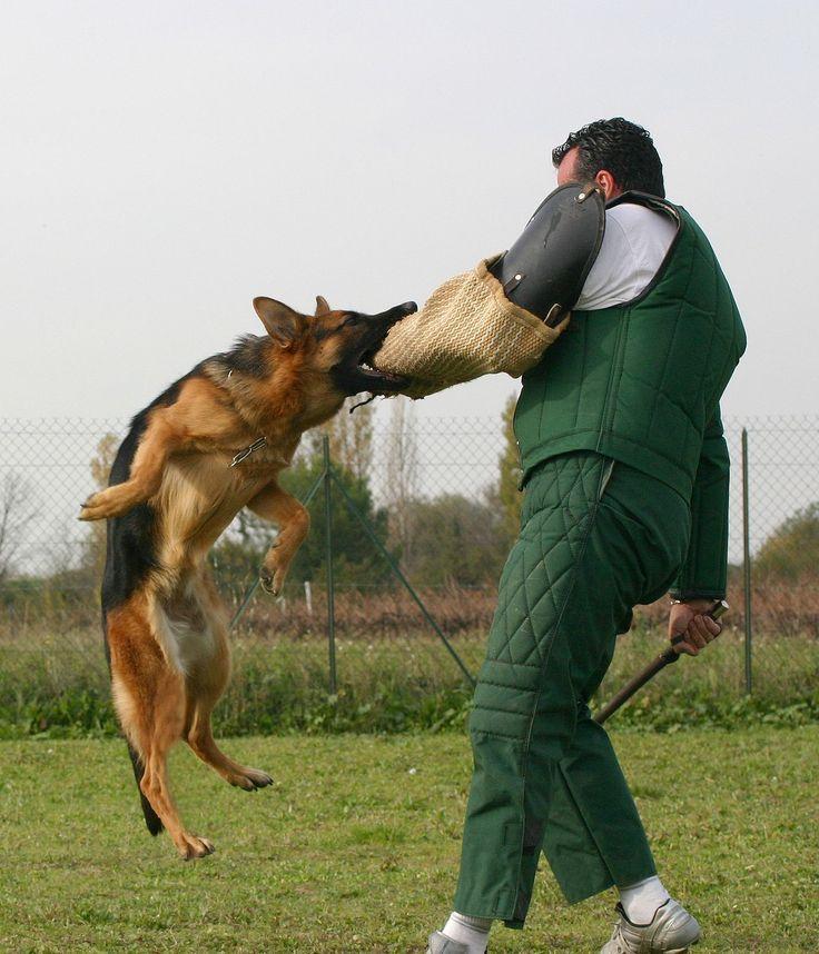 Dog Potty Training Pad #dogtrainingtips #dogtrainingpotty