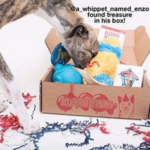 Pooch Party Packs is a monthly dog box that delivers top quality dog supplies! Treat your pup by subscribing for this party pack or send a dog gift.  sc 1 st  Pinterest & 25 best Subscription Box For Dogs images on Pinterest ... Aboutintivar.Com
