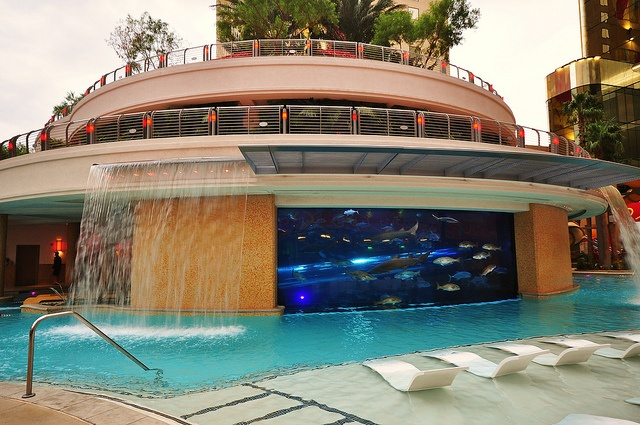 Shark Tank Swimming Pool At The Golden Nugget Hotel Las Vegas Too Cool Pinterest The