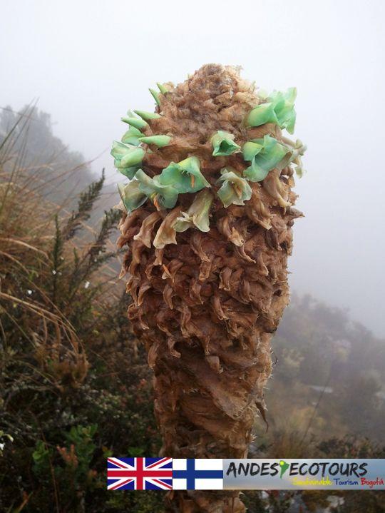 Local páramo plant life