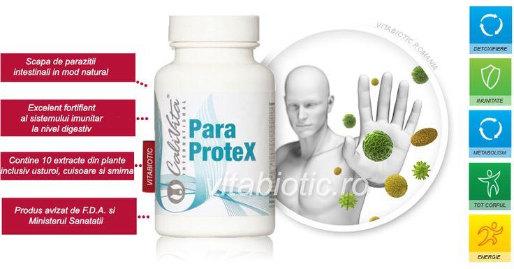 Paraprotex Calivita, pret, prospect, mod de administrare, pareri ale consumatorilor. De ce sa consumi paraprotex impotriva parazitilor intestinali si cum poate Paraprotex sa iti refaca flora intestinala. Mod de administrare paraprotex la copii. http://vitabiotic.ro/66-paraprotex-pret-prospect-pareri-contraindicatii.html
