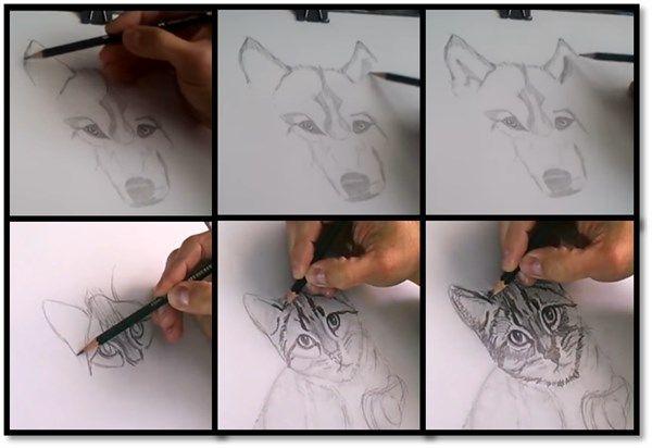 orejas de animales comunes 1