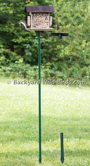 average flagpole height