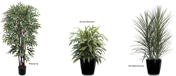 » The Clean Life: 15 Air-Purifying Indoor Plants