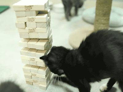 Jenga master. | The Best Cat GIF Post In The History Of Cat GIFs