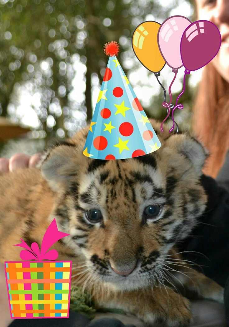 Happy birthday from our tiger cubs