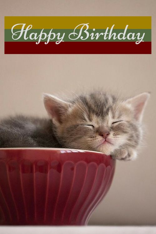 Cat Stock Quote Mesmerizing 88 Best Cat Birthday Cards Images On Pinterest  Happy Brithday . Decorating Design