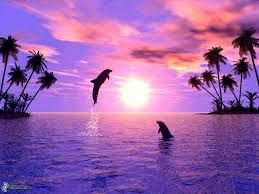 Výsledek obrázku pro italské m oře  delfini