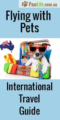 Flying With Pets International Travel Guide will help ease the stress when it comes to organising your pet for flying to and from Australia. #travel #pettravel #petair #petairtravel #travelingwithpets #flyingwithpets