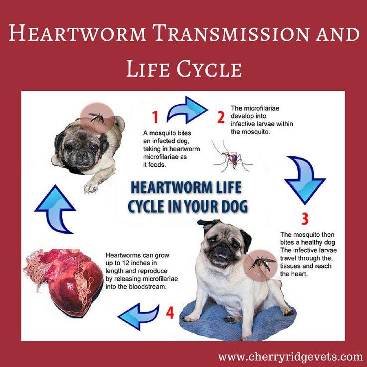 Heartworm Disease Awareness image by Cherry Ridge