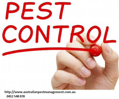 We make every possible attempt to remove these insects from your property to obtain your full satisfaction.