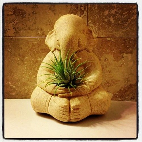 #ganesh #airplant #tillandsia - apartmentf15 photo