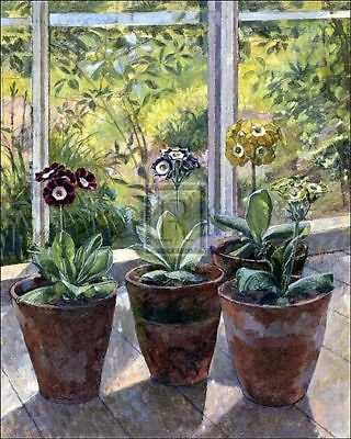 Auriculas in Flower Pots by John Morley