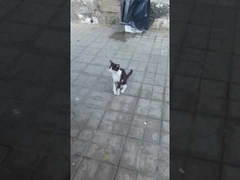 Gato herido busca acogida https://youtube.com/watch?v=_57AGwgIW0E