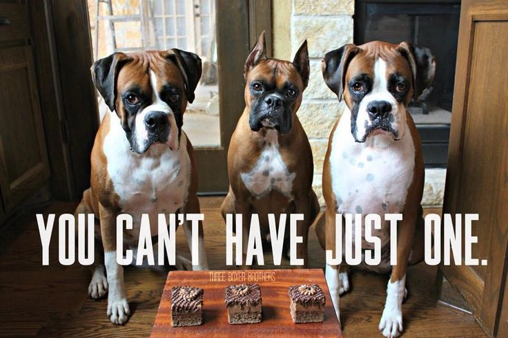 Funny Boxer Dog Meme : Best images about boxers on pinterest dogs