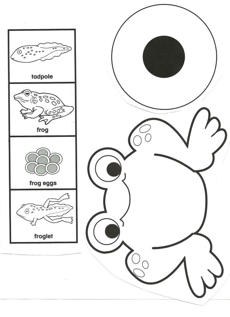 Origami Frog Life Cycle