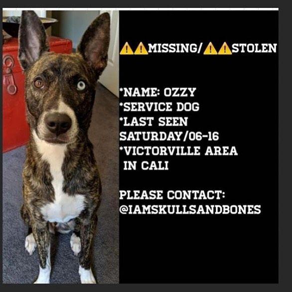 6 19 19 Lost In The Victorville Area In California Please Share California Help Get Ozzy Home Lostdog Calofornia