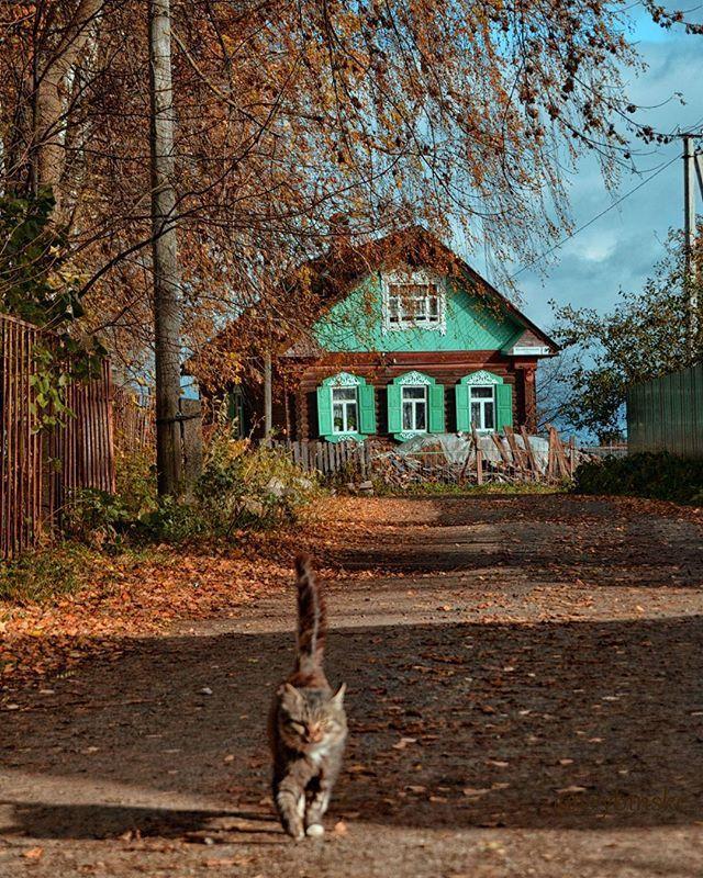 @vrybinske: 🚶Рыбинский район, деревня Балобаново.  .  📄Увидела этот интересный домик со ставнями (кстати, первый раз со ставнями попался), хотела подойти поближе, но тут меня остановил лай собаки, а их я боюсь очень, т.к. была уже кусана однажды. Пришлось прицеливаться издалека, и тут этот котик, откуда ни возьмись, как метеор мчится... В общем, он был быстрее меня😃! Пы.Сы. Потом на машине под'ехала ближе посмотреть на дом, а там во дворе козы свободно гуляют, овчарка на крылечке…