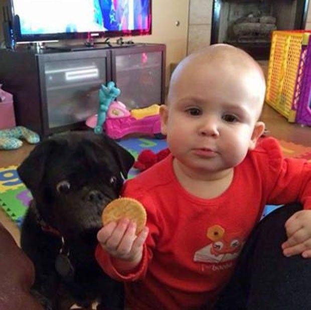 O segundo antes do roubo do biscoito - Portal do Dog