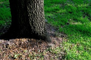 Shade Tolerant Grass: Learn About The Best Grass Seed For Shade