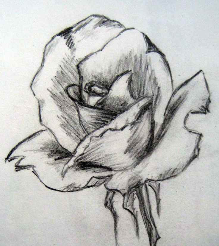 Easy Pencil Drawings of Flowers | Art By Prem (•) Com: Sketch and Painting of a Rose