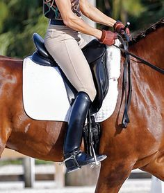 One of the hallmarks of a classical dressage position is a long, flat thigh. This positioning of the thigh pulls the seat bones down into the saddle, creating a deep, connected seat and stability in