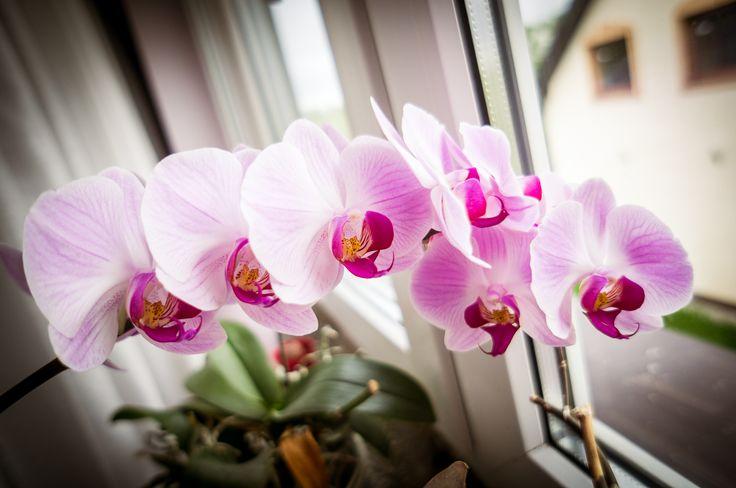 kwiatki :) kolejne zdjęcie zrobione obiektywem typu pancake  #sony #nex #nexf3 #kwiaty #flowers