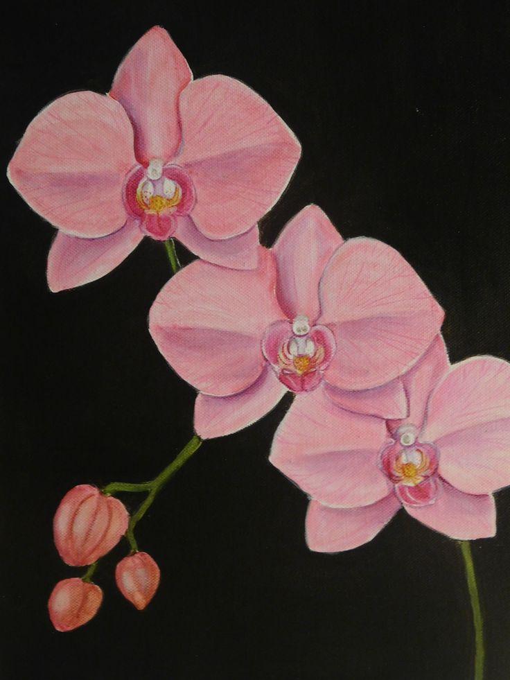 https://flic.kr/p/JHoWxs | DSCN0058 | Phalaenopsis orchid still life - R. Lavia
