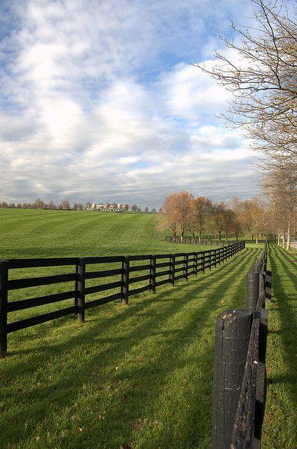 #fence ideas
