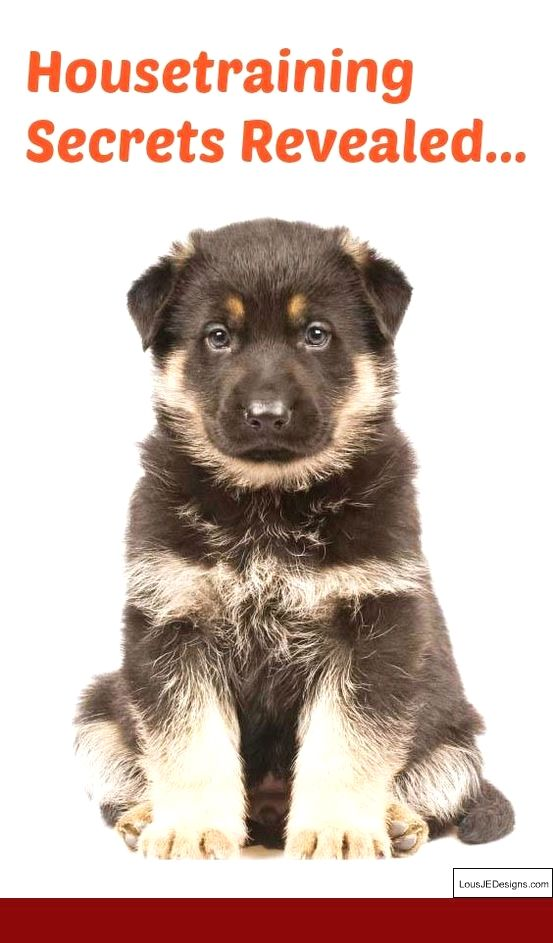 K9 Dog Training Tips And Pics Of How To Train A Dog Not To Bark
