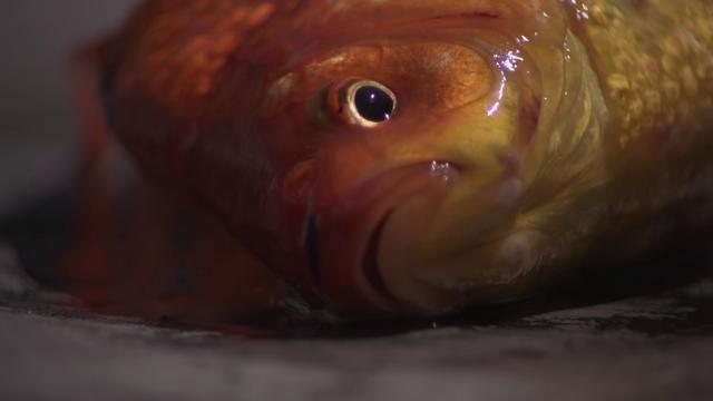 Sigur Rós - Ég anda by Sigur Rós Valtari Mystery Films. Sigur Rós 'Valtari' Mystery Film Experiment: Ég anda by Ramin Bahrani. Heartbreaking, beautiful video.