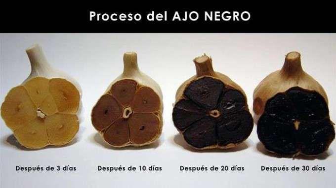 proceso del ajo negro ok