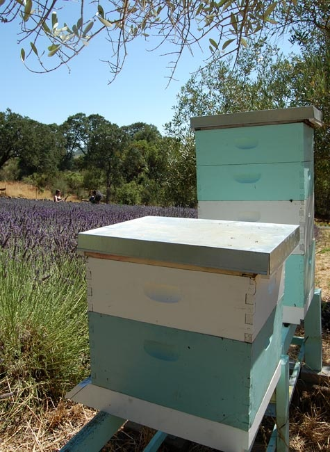 bee boxes. maybe alternating storage boxes.