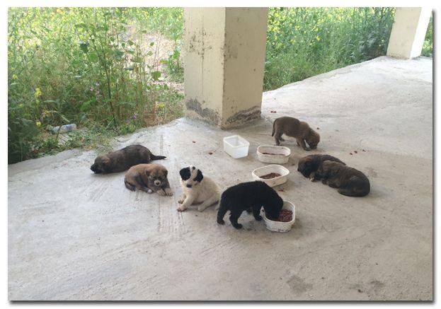 De honden van Dog Rescue Greece: Nestje van negen pups, samen met hun moeder gered in Nea Kallikratia