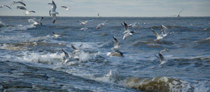 Traumhaftes Norderney ►► Entdecken Sie die Vielfalt unserer Insel