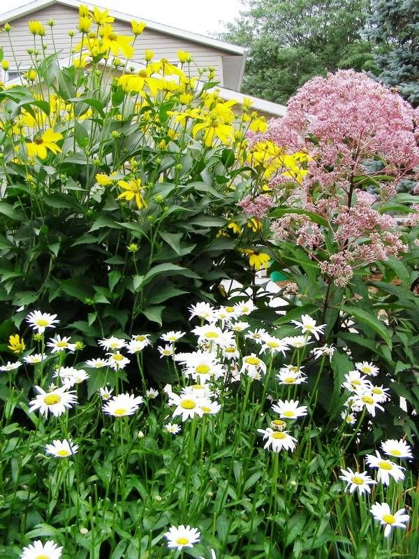 View Image 'Daisy, Joe-Pye Weed, and Herbstsonne...'