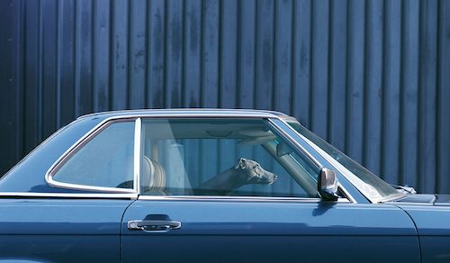 Three words: dogs in cars. #dogs #cars #designsponge
