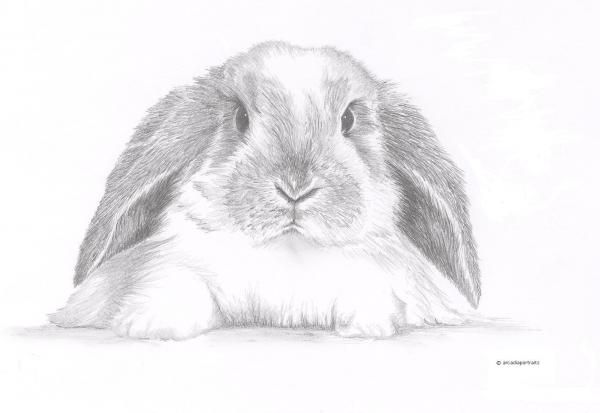 Lop Bunny drawing <3