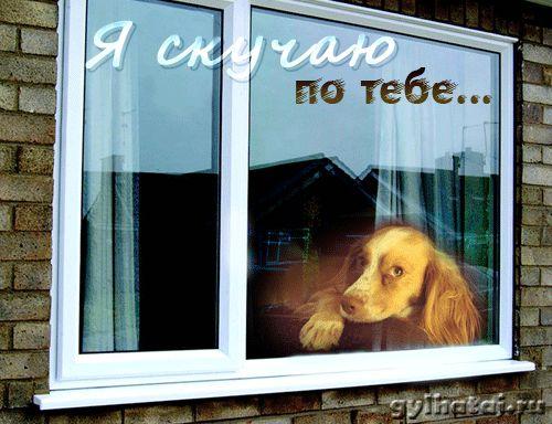 Я скучаю по тебе. Картинка собаки. Анимационные картинки.